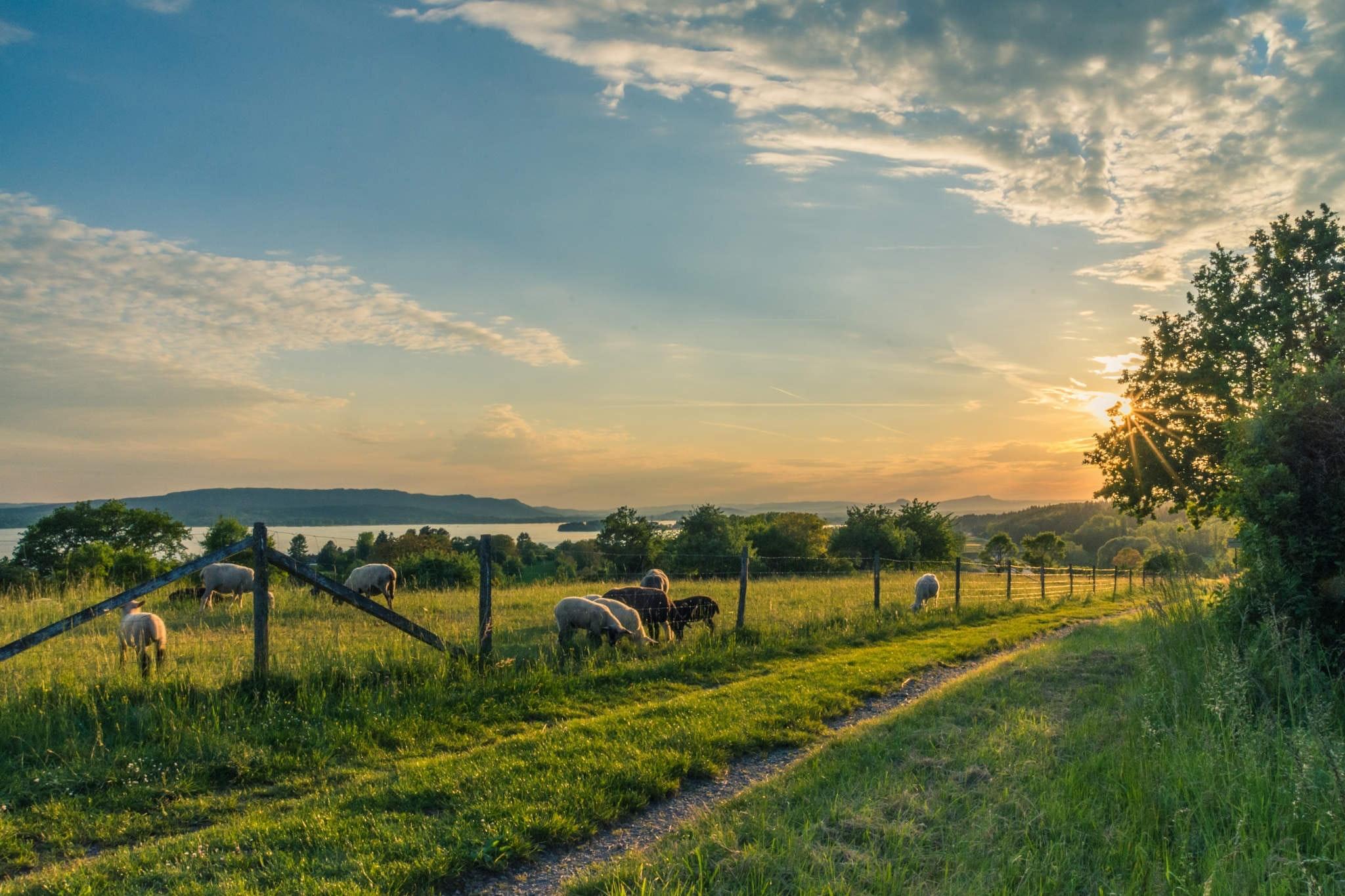 Countryside cropland dawn 158179