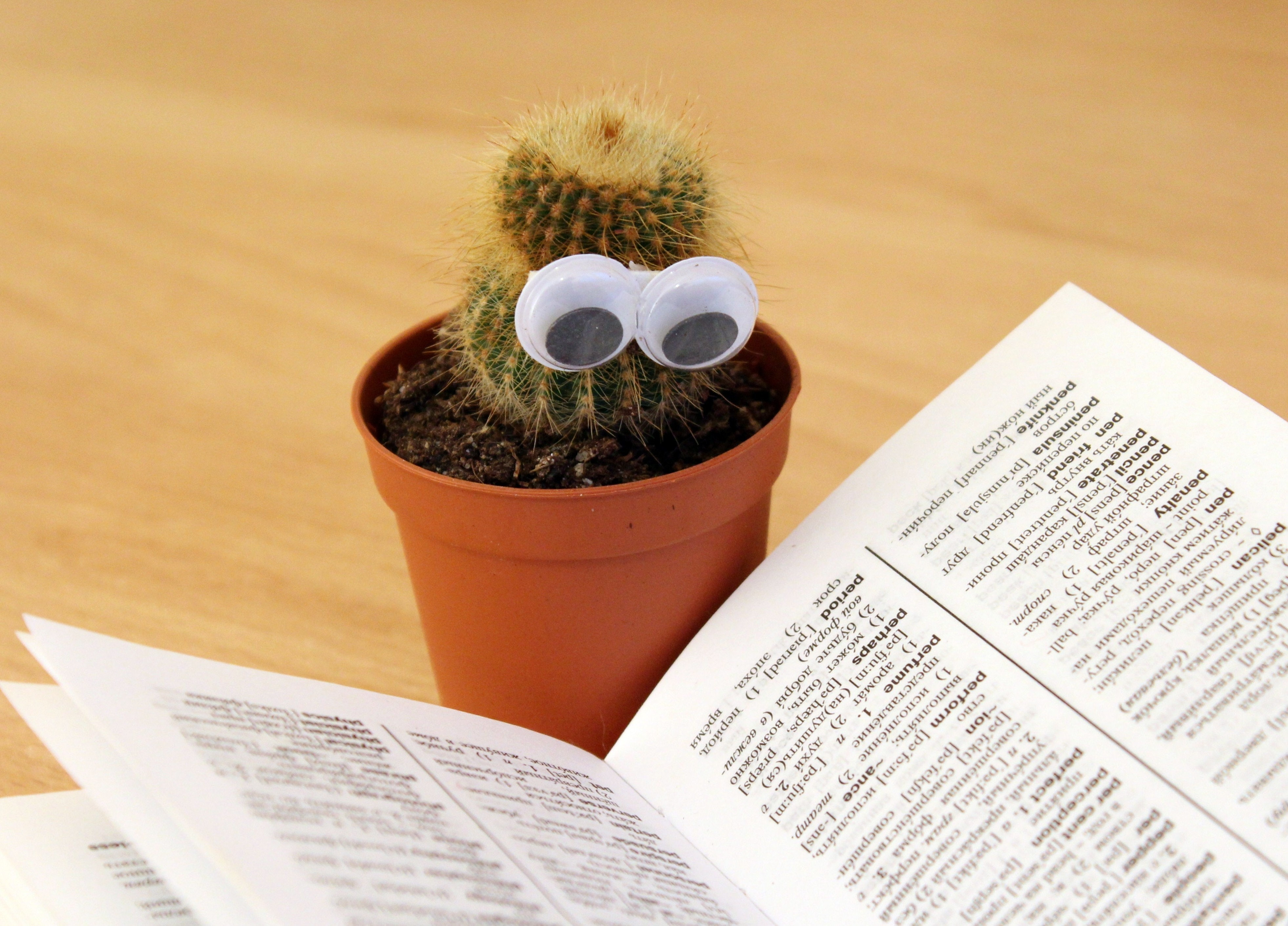 Book cactus knowledge 159840