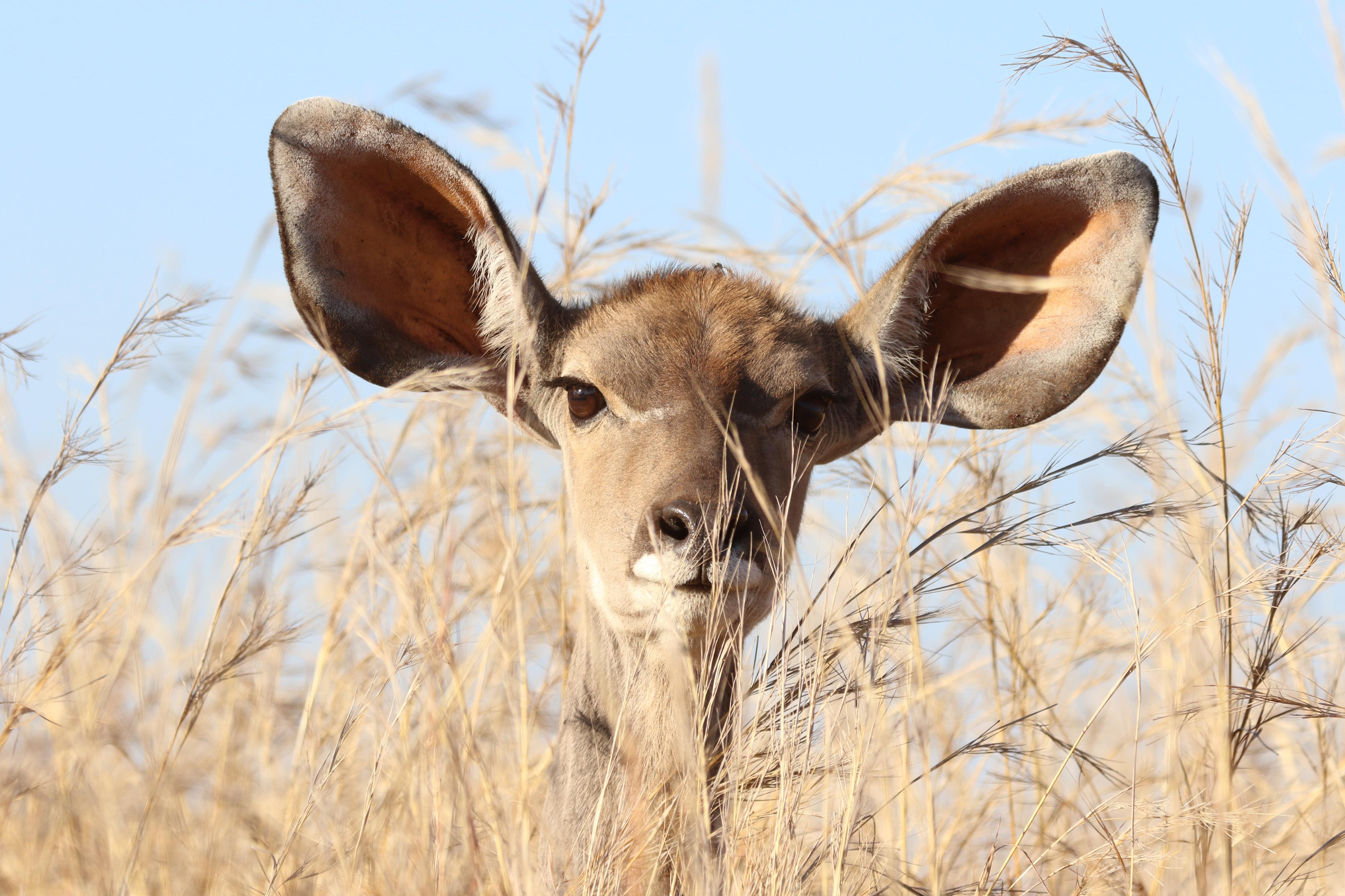 Animal animal photography barbaric 561870