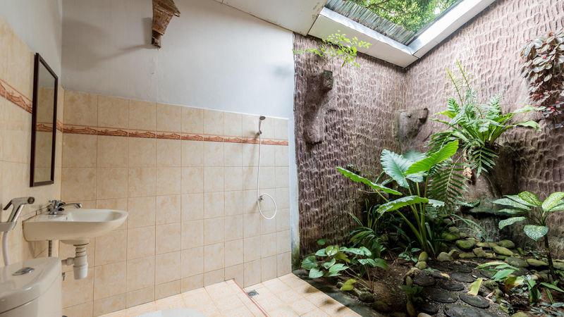 Medium crop orang utan room 018