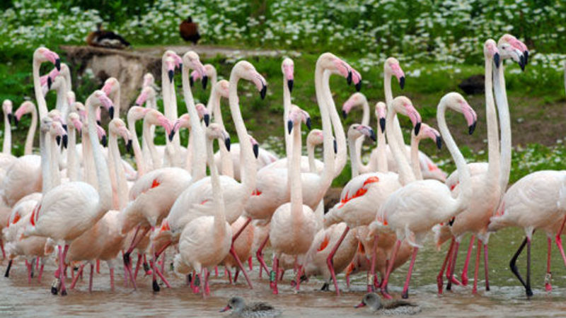 Medium crop standalone flamingos02