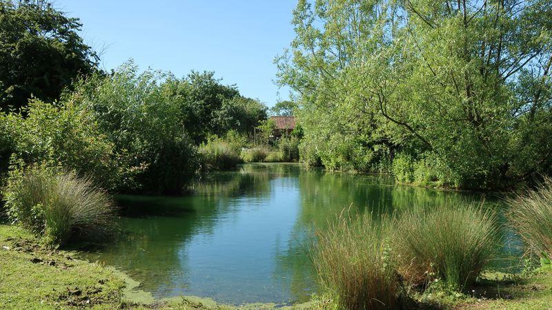 Medium crop pond 1   copy