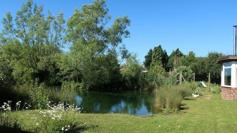 Medium crop pond 4