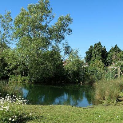Thumb pond 4