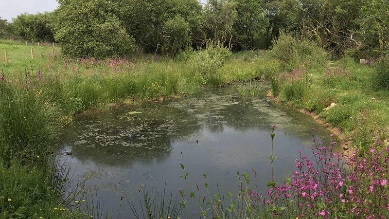 Medium crop higher trewithen holiday cottages wildlife lake 3