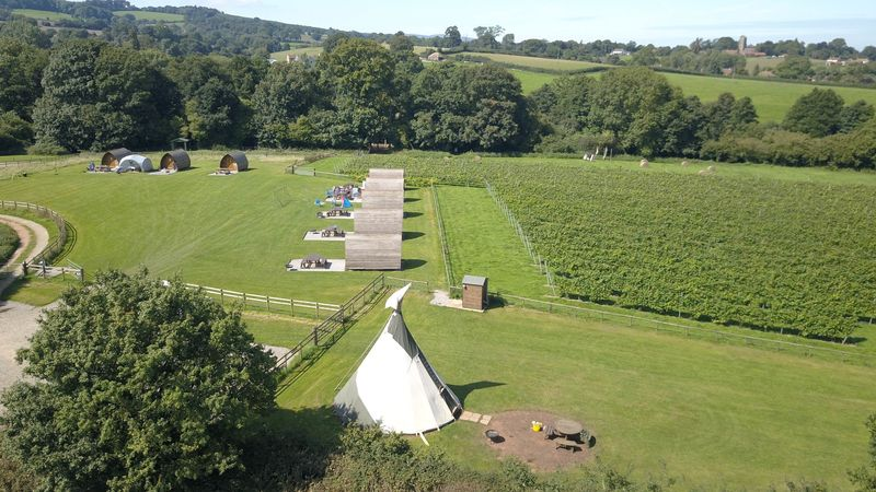 Medium crop vineyard wigwams2