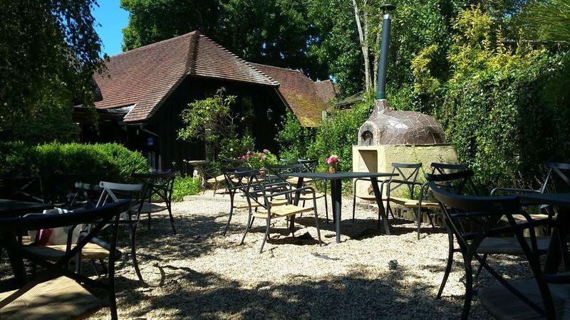 Medium crop tea garden