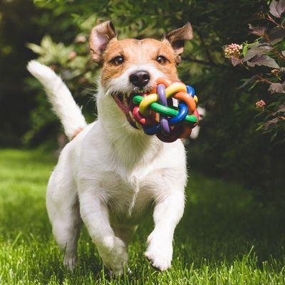 Thumb dog  2