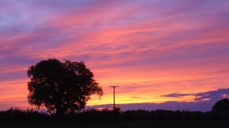 Medium crop mollett s farm   sunset with oak tree