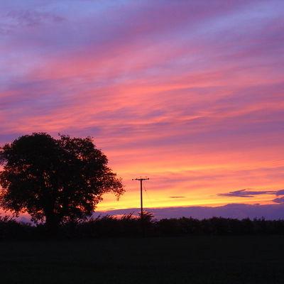 Thumb mollett s farm   sunset with oak tree